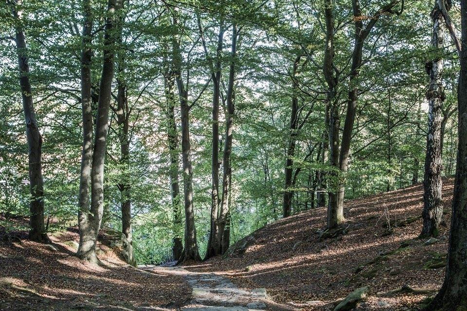 Las przy mieszkaniu w bloku